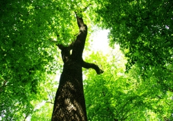Oakwood Tree Surgeons - Garden Maintenance in Southgate